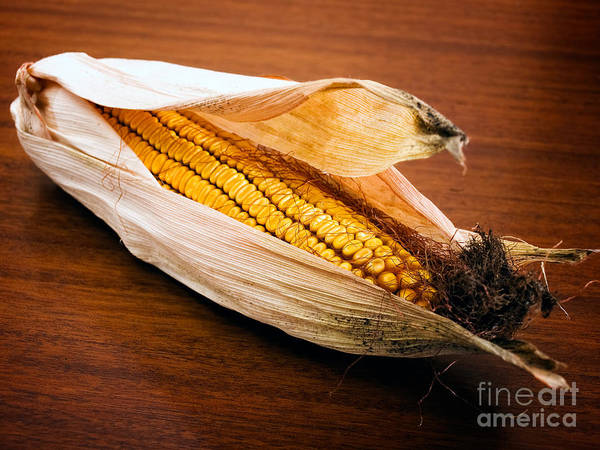 Wheat Print featuring the photograph Corn Ear by Sinisa Botas