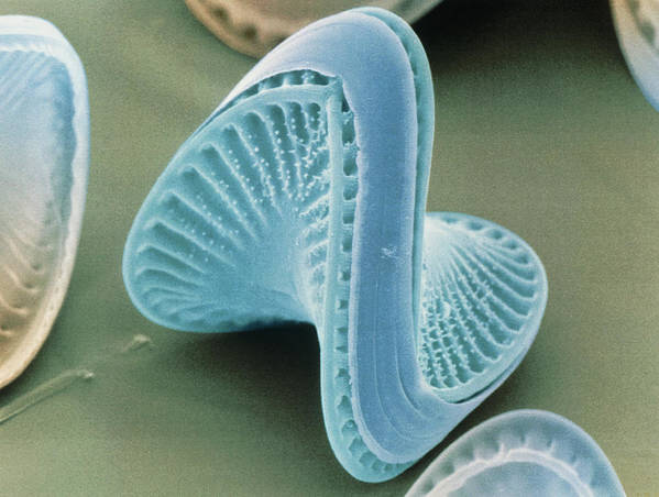 Diatom Print featuring the photograph Diatom Algae, Campylodiscus by Power And Syred