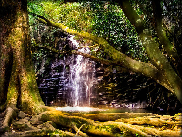 Forest Print featuring the photograph Fantasy Forest by Karen Wiles