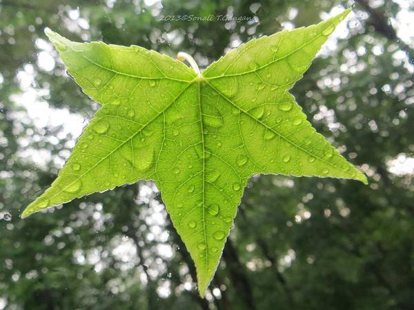 Green Print featuring the photograph Green Droplets by Sonali Gangane