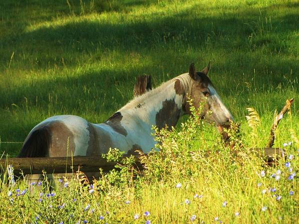 Horse Print featuring the photograph Meet Me At The Fence by Feva Fotos