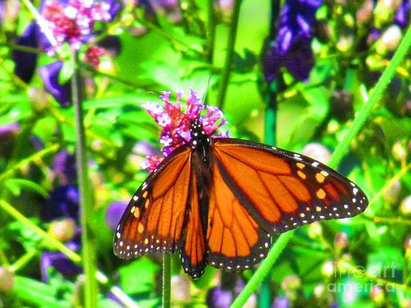 Butterfly Print featuring the photograph Monarch Beauty by Nicole Engelhardt