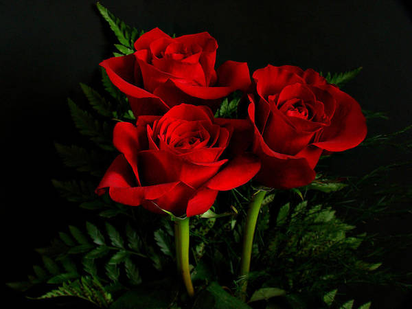 Flowers Print featuring the photograph Red Roses by Sandy Keeton