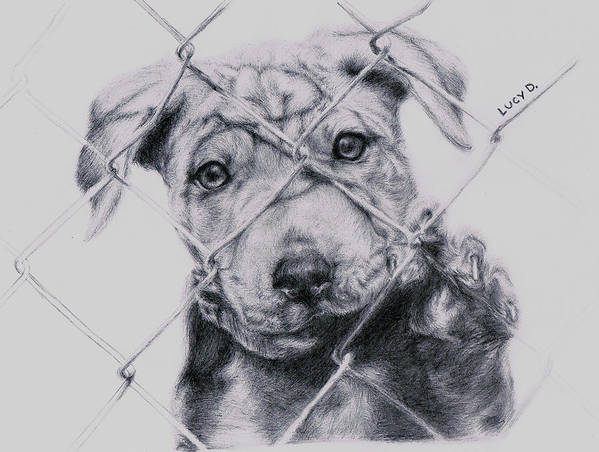 Animals Print featuring the drawing Save Me by Lucy D