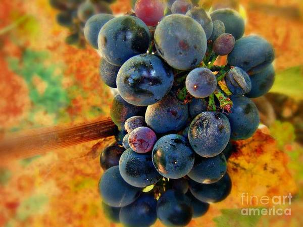 Wine Print featuring the photograph Fall Harvest by Kevin Moore