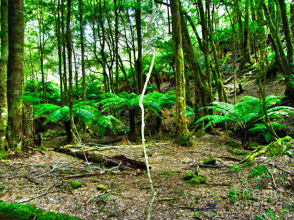 Tree Fern Photographs Print featuring the photograph Fern Grove by Joanne Kocwin