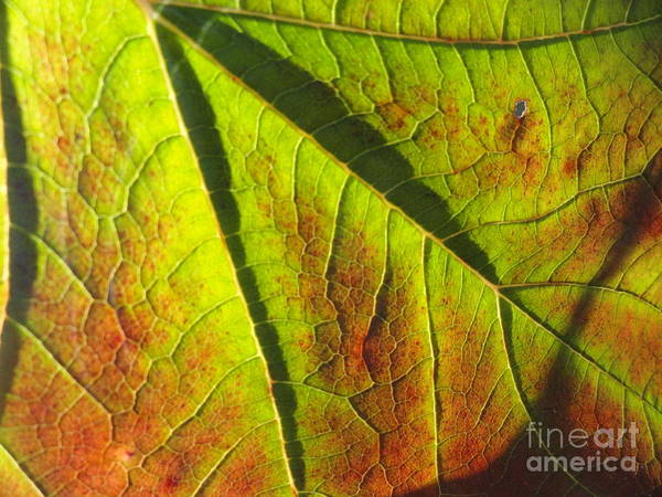 Leaves Print featuring the photograph Green Days Past by Trish Hale