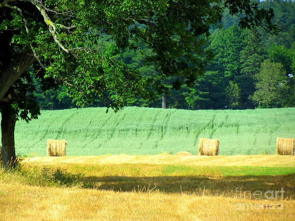 Hay Print featuring the glass art Hay Landscape by France Laliberte