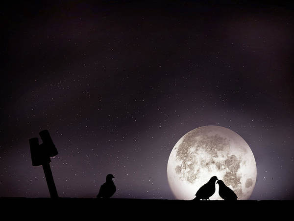 Horizontal Print featuring the photograph Moon With Love Pigeon by Mhd Hamwi