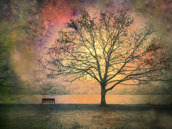 Tree Print featuring the photograph And The Morning Is Perfect In All Her Measured Wrinkles by Tara Turner