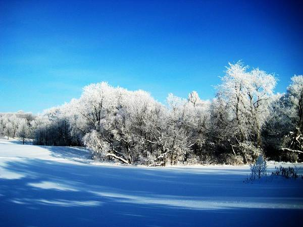 Winter Print featuring the photograph Blue by Toni Jackson
