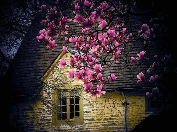 Flowers Print featuring the photograph Dogwood By The Window by Joyce Kimble Smith