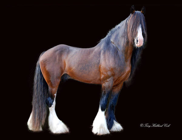Horse Print featuring the photograph English Shire Study by Terry Kirkland Cook