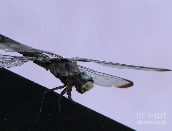 Dragon Fly Print featuring the photograph So Many Bugs So Little Time by Priscilla Richardson
