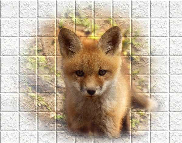 Fox Print featuring the photograph Artistic Cute Kit Fox by Thomas Young