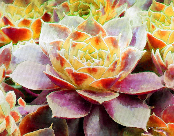 Hens And Chicks Photography Print featuring the painting Hens And Chicks Series - Early Morning Quite by Moon Stumpp