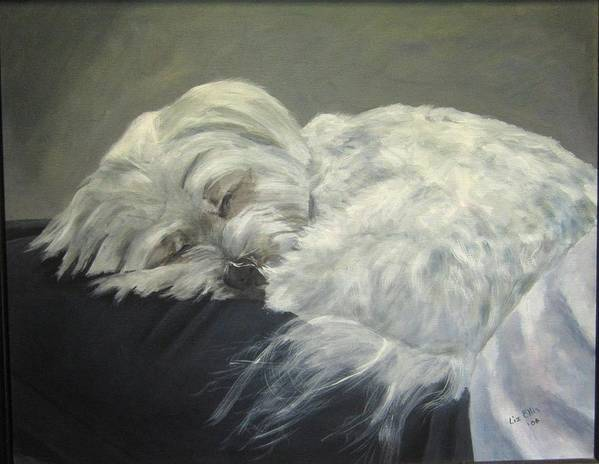 Maltese Dogs Print featuring the painting Lap Dog by Elizabeth Ellis