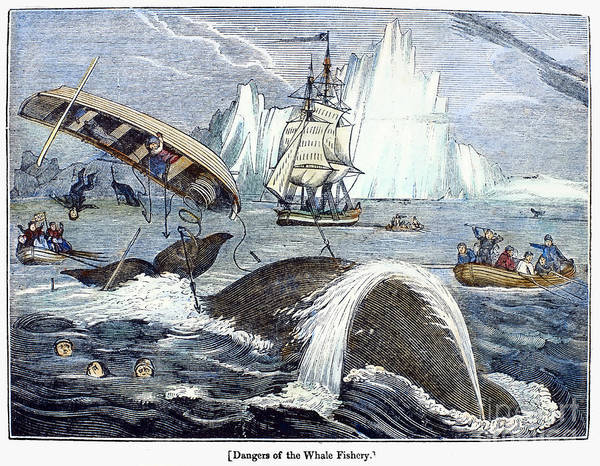 1833 Print featuring the photograph Whaling, 1833 by Granger