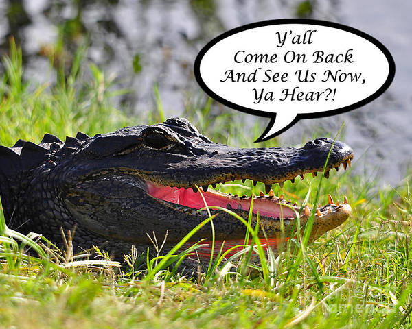 Alligator Print featuring the photograph Alligator Yall Come Back Card by Al Powell Photography USA