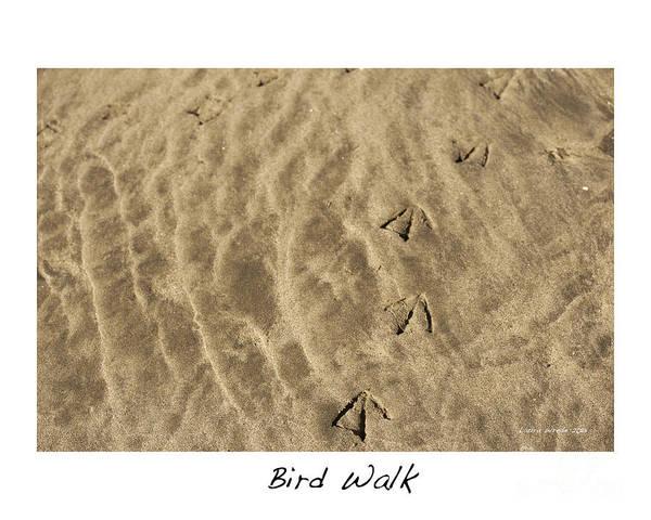 Bird Feet Print featuring the photograph Bird Walk by Artist and Photographer Laura Wrede