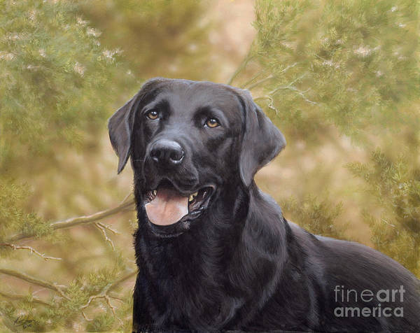 Black Labrador Print featuring the painting Black Watch by John Silver