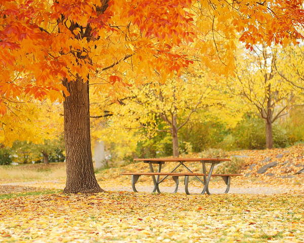 Print featuring the pyrography Empty Park On A Fall Day by Yoshiko Wootten