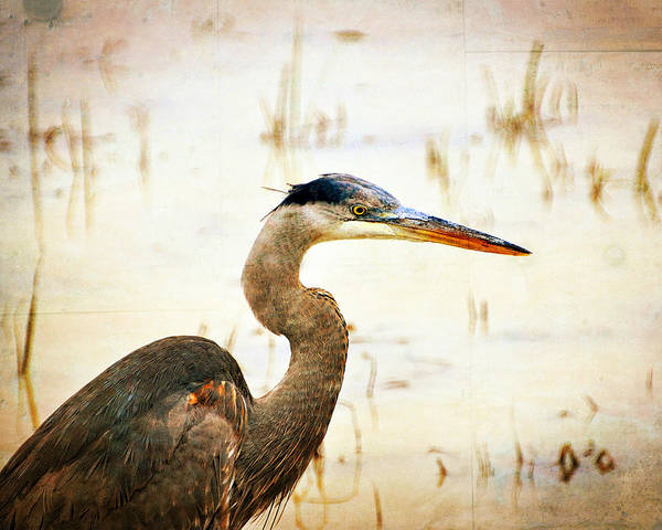 Great Blue Heron Print featuring the photograph Heron by Marty Koch