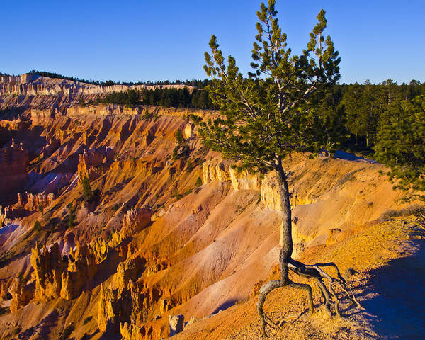 Bryce Canyon National Park Print featuring the photograph Know Your Roots - Bryce Canyon by Jon Berghoff