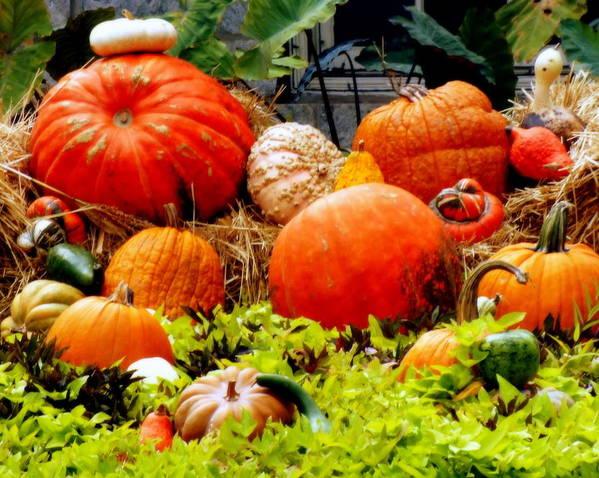 Harvest Print featuring the photograph Pumpkin Harvest by Karen Wiles