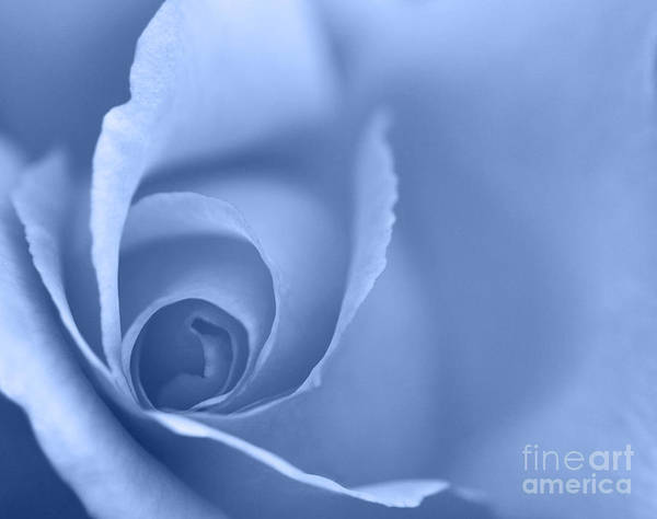 Rose Print featuring the photograph Rose Close Up - Blue by Natalie Kinnear