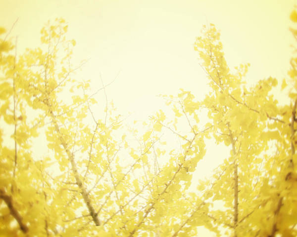 Yellow Tree Print featuring the photograph Time After Time by Amy Tyler