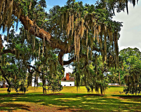 Evergreen Plantation Print featuring the photograph Plantation by Steve Harrington