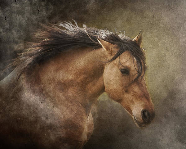 Equine Print featuring the photograph Chase The Wind by Ron McGinnis