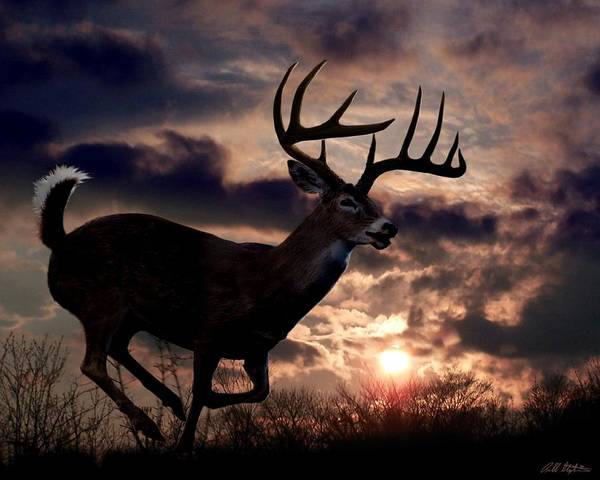 Whitetail Deer Print featuring the digital art On The Run by Bill Stephens