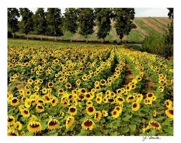 Sunflower Print featuring the photograph A Thousand Suns by Joe Bonita
