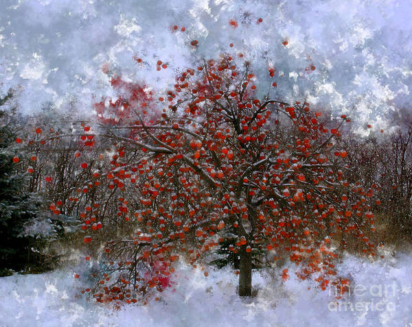 Apple Tree Print featuring the photograph An Apple Of A Day by Julie Lueders