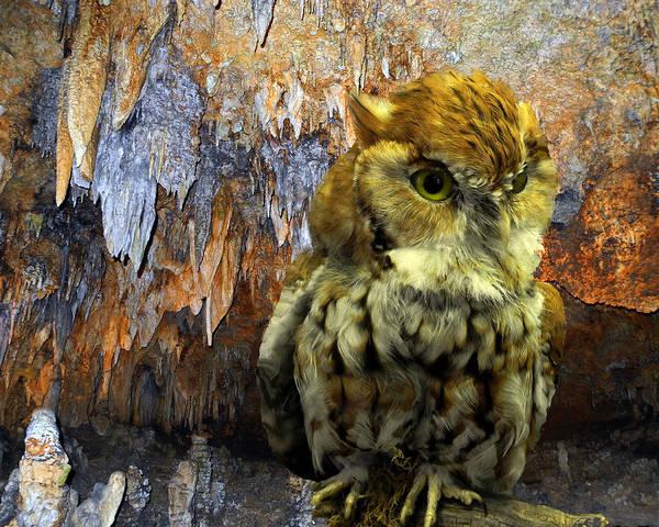 Owl Print featuring the photograph Cavern Watch by Lynda Lehmann
