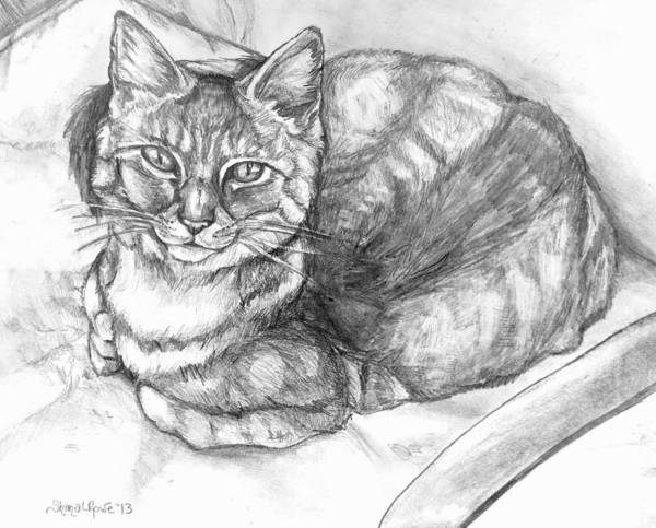 Cat Print featuring the drawing Puff by Shana Rowe Jackson