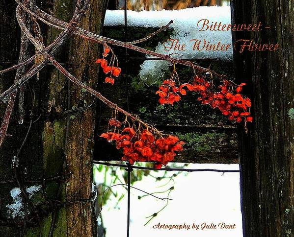Bittersweet Print featuring the photograph Bittersweet The Winter Flower by Julie Dant