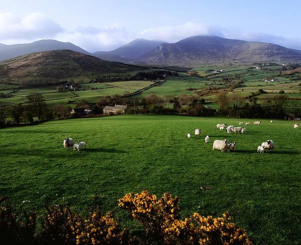 Animals Print featuring the photograph Mourne Mountains From Trassey Road, Co by The Irish Image Collection