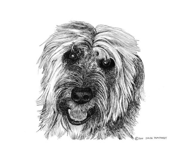 Pen And Ink Art Of Rocky Whose Owner Print featuring the drawing Rocky by Jack Pumphrey