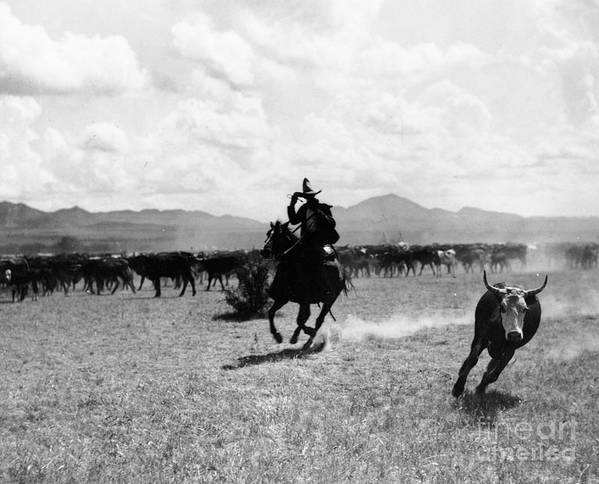 Raguero Cutting Out A Cow From The Herd (b/w Photo)wild West; Stetson; Cattle; Gallop; Round-up; Cowboy; Herding; Cattle; Plains; Old West; Western; Horse; Horseback; Rider; Riding; American Landscape; Atmospheric; Rustler Print featuring the photograph Raguero Cutting Out A Cow From The Herd by Raguero cutting out a cow from the herd
