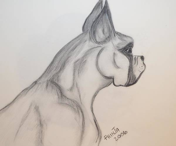 Boxer Print featuring the drawing Big Boxer by Maria Urso