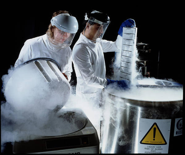 Microbiology Laboratory Print featuring the photograph Researchers Handling Trays Of Frozen Bacteria by Geoff Tompkinson
