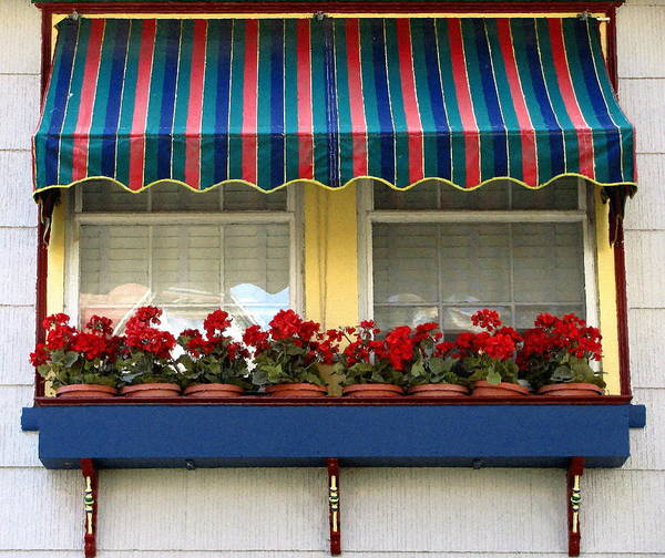 Window Box Print featuring the photograph Window Box Geraniums by Colleen Kammerer