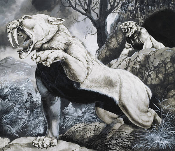 Big Cat; Wild; Cats; Sabre-tooth; Sabretoothed; Sabretooth; Extinct; Sabre Tooth; Toothed; Fierce; Teeth; Fangs Print featuring the painting Sabre-toothed Tigers by Richard Hook