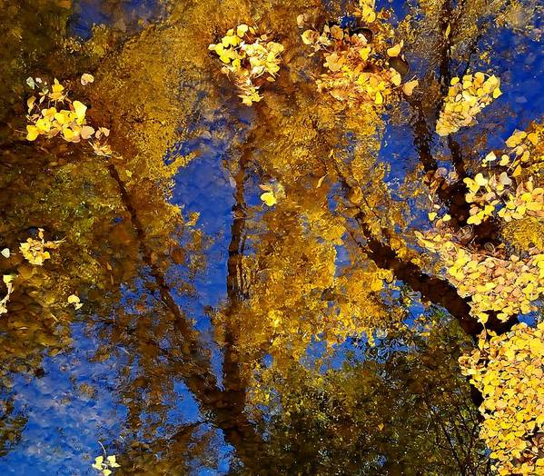 Color Print featuring the photograph Autumns Reflections by Steven Milner