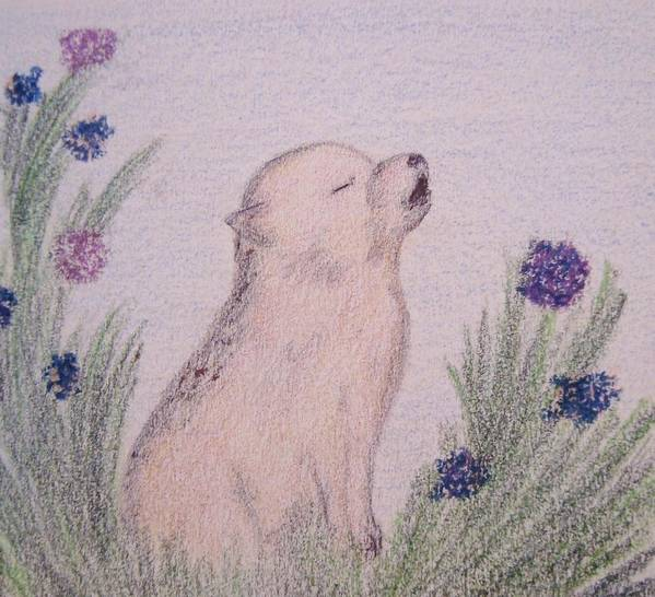 Wolves And Nature Print featuring the drawing Howling Wolf Pup by Christine Corretti