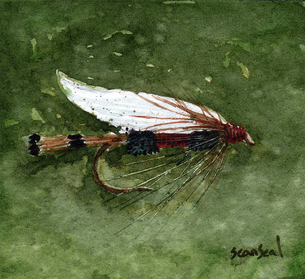 Fly Fishing Print featuring the painting Royal Coachman Wet Fly by Sean Seal