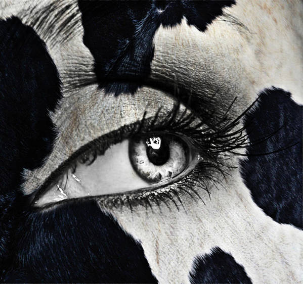 Human Eye Print featuring the glass art Cow by Yosi Cupano